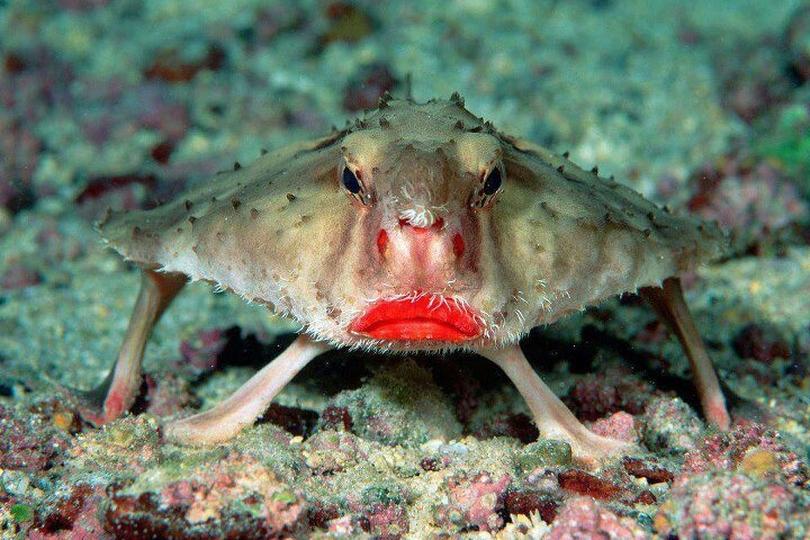 3. Batfish