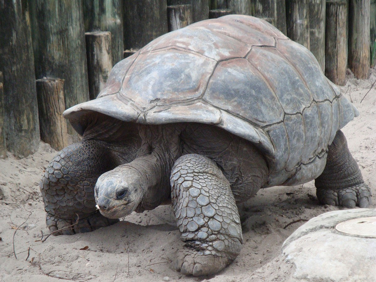 1. Giant Tortoise Shell