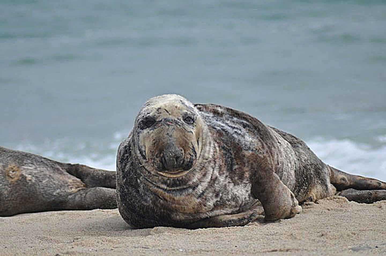 9. Grey Seal