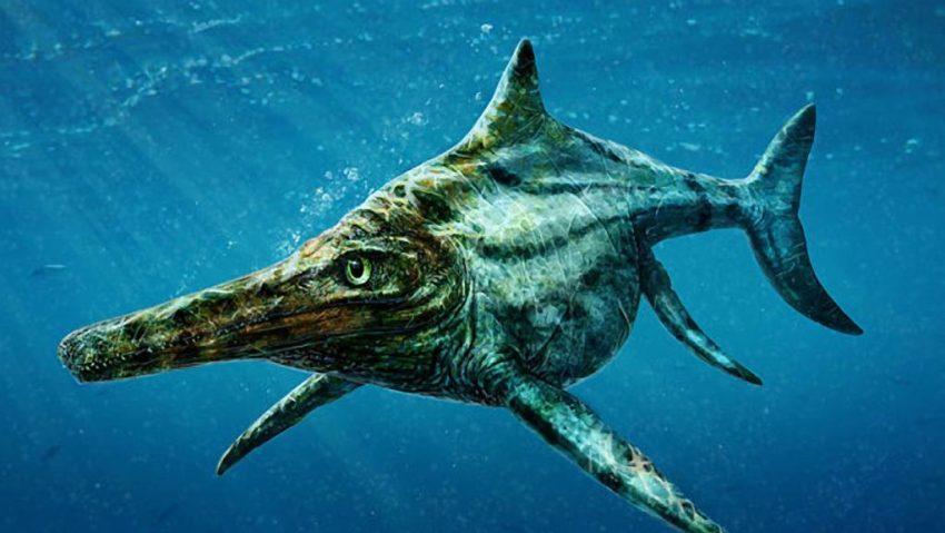10. Ichthyosaur Skeleton