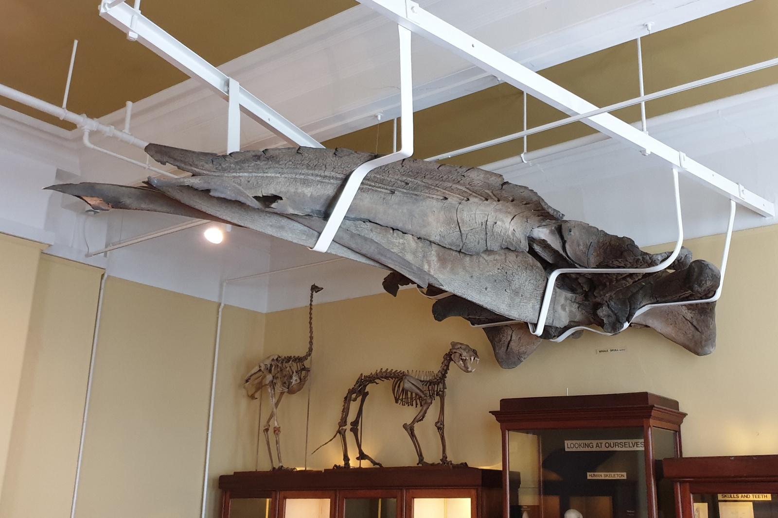 7. Whale Skull