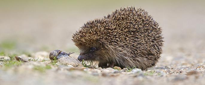Hedgehog Talks and Drop-in Sessions